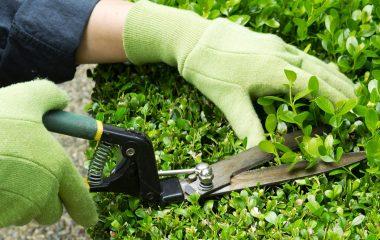 gardening 1050x700